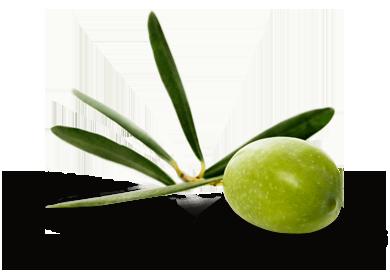 agriturismo-magauda-oliva